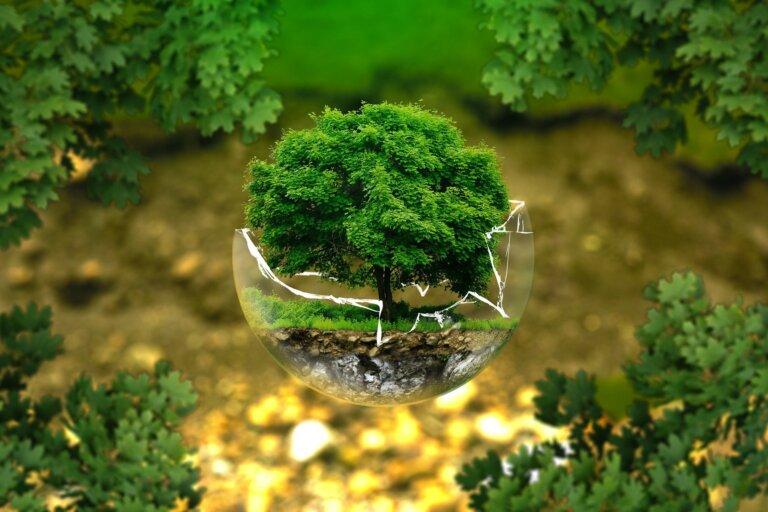 A környezetvédő diéta